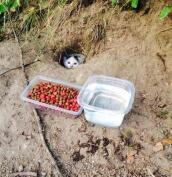 一网友遇到一只流浪小猫,躲在洞口